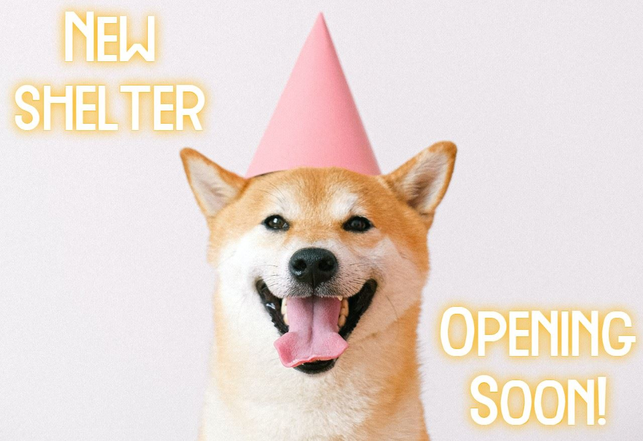 Shiba Inu dog in party hat with words new animal shelter opening soon